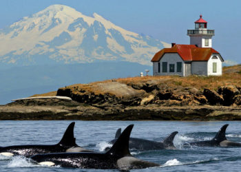 Pacific Northwest Featuring The San Juan Islands